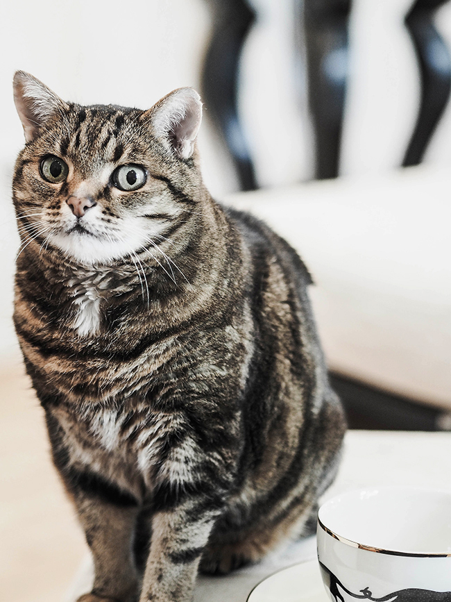 Auf leisen Pfoten: Warum Katzen immer ihre eigenen Geschichten schreiben (und wir sie dafür lieben).