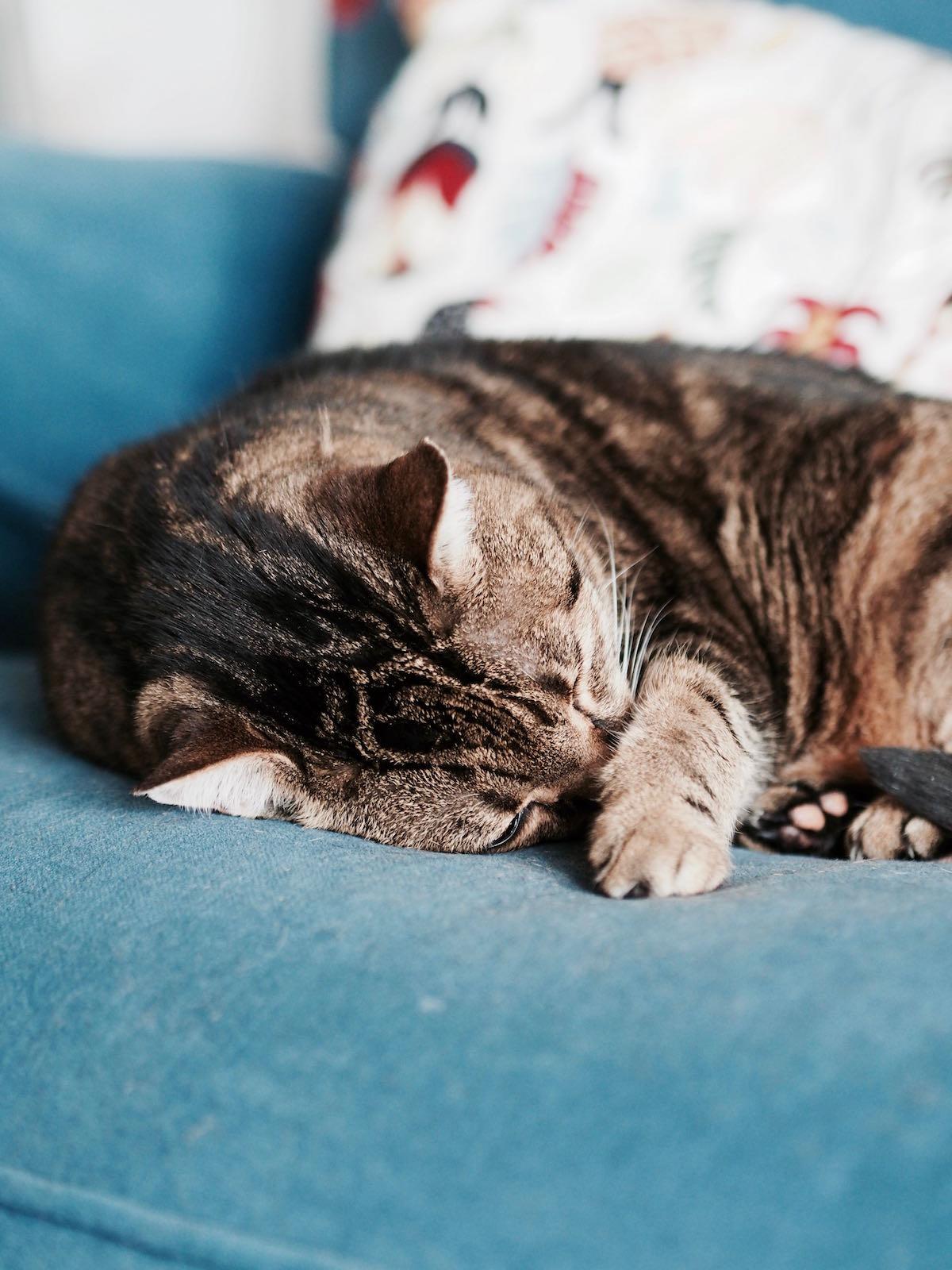 auf leisen pfoten warum schlafende katzen meiner seele. Black Bedroom Furniture Sets. Home Design Ideas