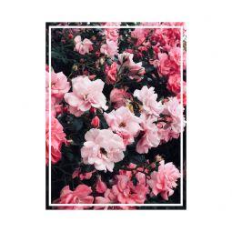 Rosen im juni 3