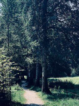 Wald sehnsuchtsort