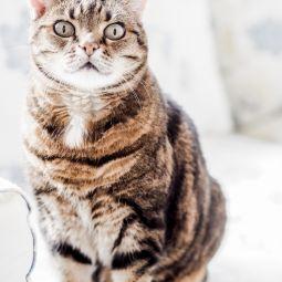 Katzenliebe 3