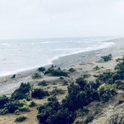 Patagonien peninsula valdez