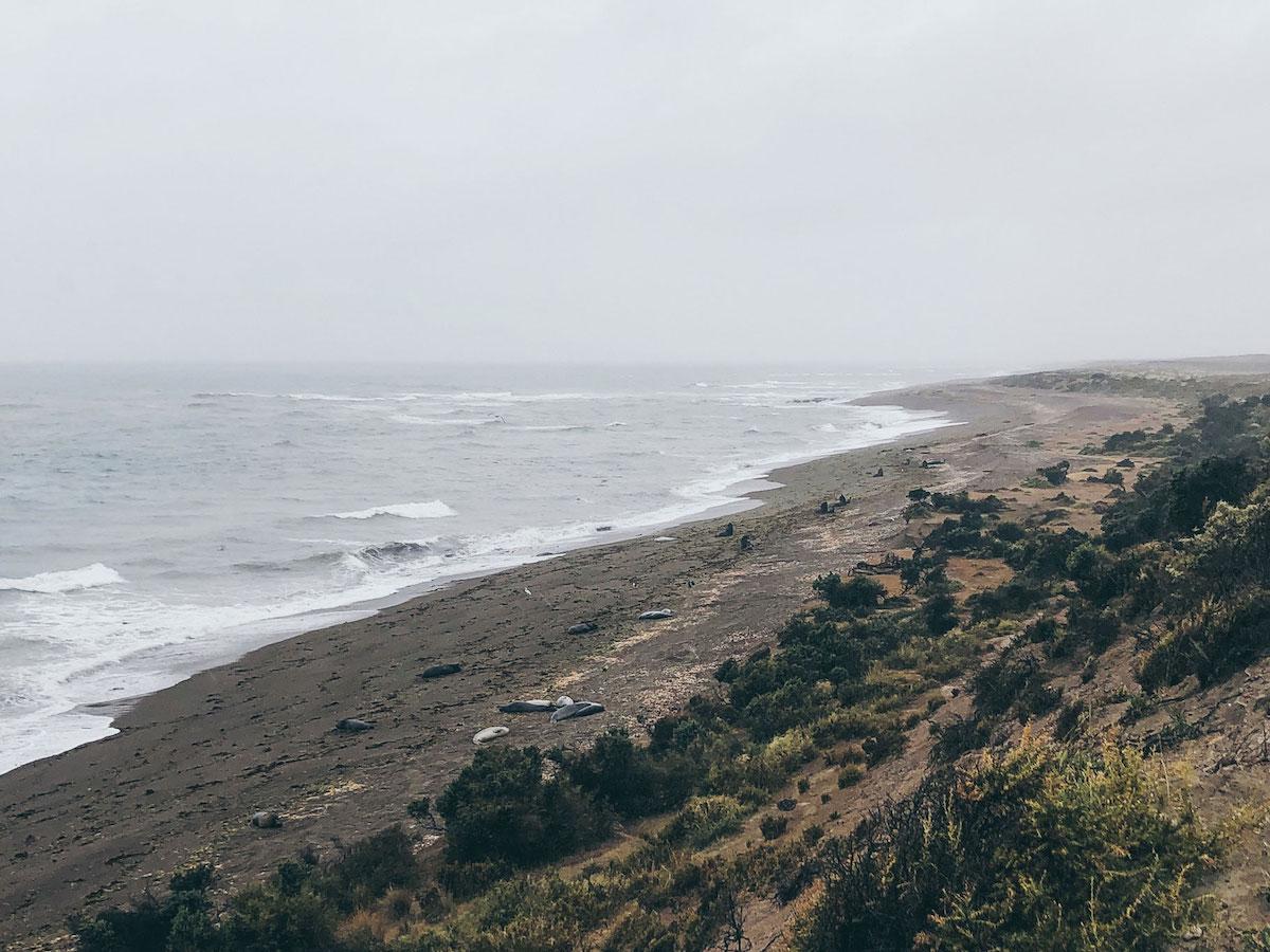 Seelöwen und Seeelefanten auf der Halbinsel Valdez