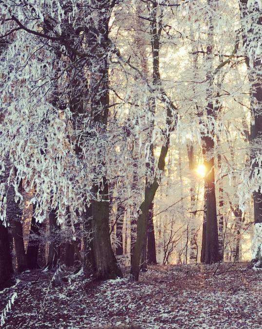 Wald im winter 2