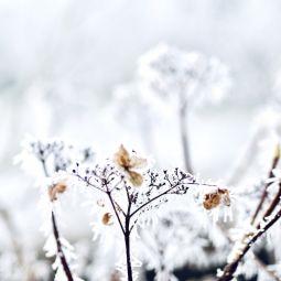 Frost januar 2019 2