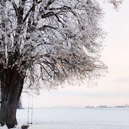 Schnee 6