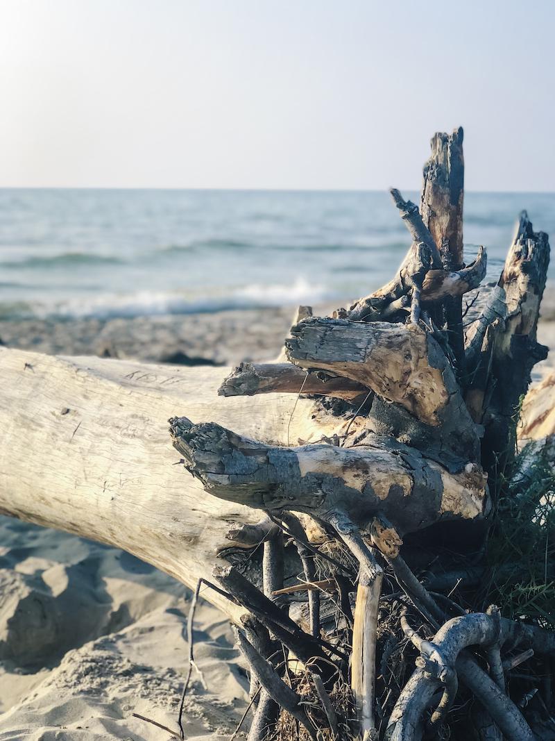 Am Weststrand auf Fischland-Darss-Zingst