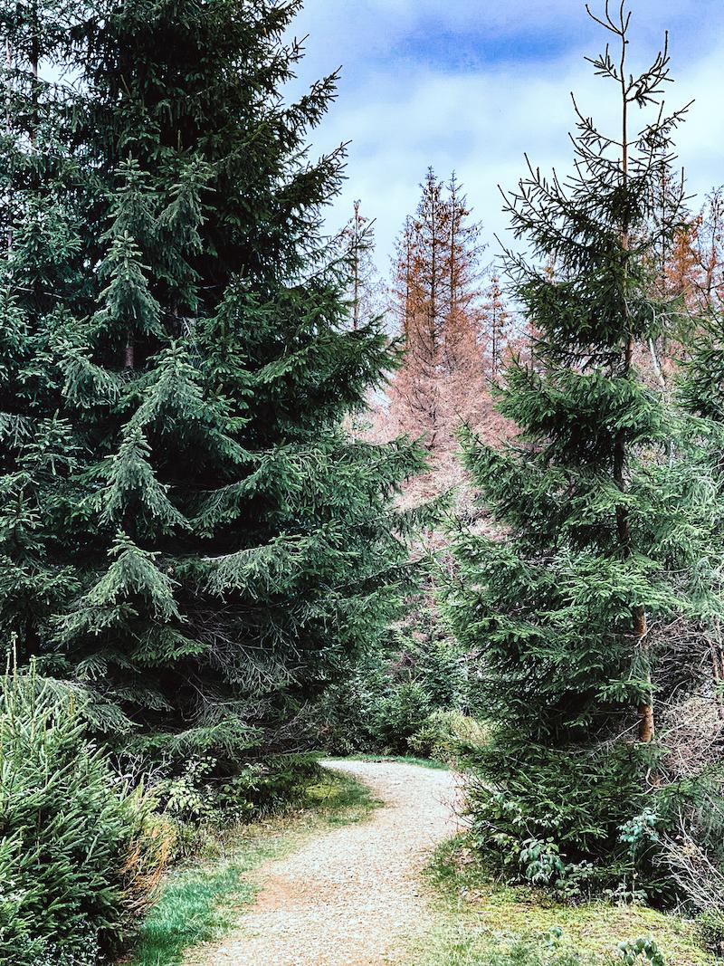 Texterella besucht den Harz: Wandern in der Natur