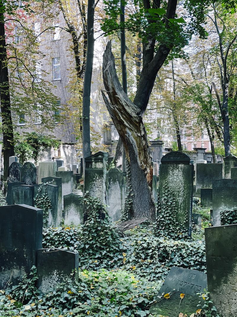 Susanne Ackstaller Texterella unterwegs in Prenzlauer Berg - jüdischer Friedhof