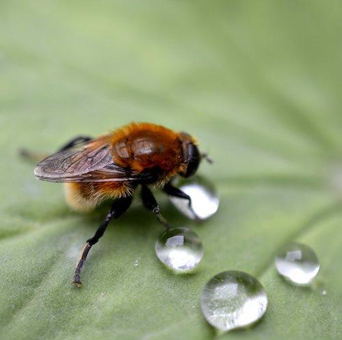 Biene findet einen Schatz. Alltagspoesie von Ruth Frobeen.