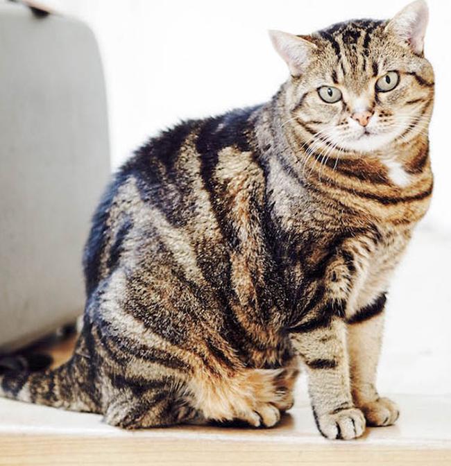 Wenn die Menschen Urlaub machen: eine kleine Kolumne über verreisende Menschen und daheimbleibende Katzen