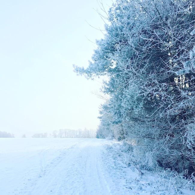 Frost im Januar