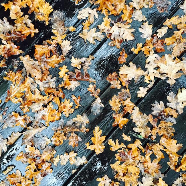 Herbst: nasse Blätter im Regen!