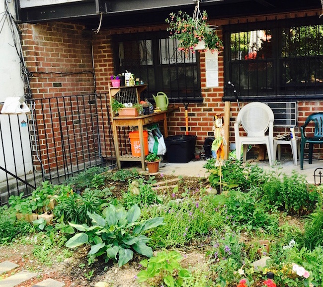 Urban Gardening in Williamsburg