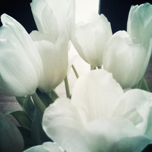 Tulpen in Monochrom.