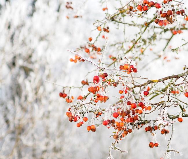 Was mag das neue Jahr wohl bringen, dass so neu und funkelnd vor uns liegt?