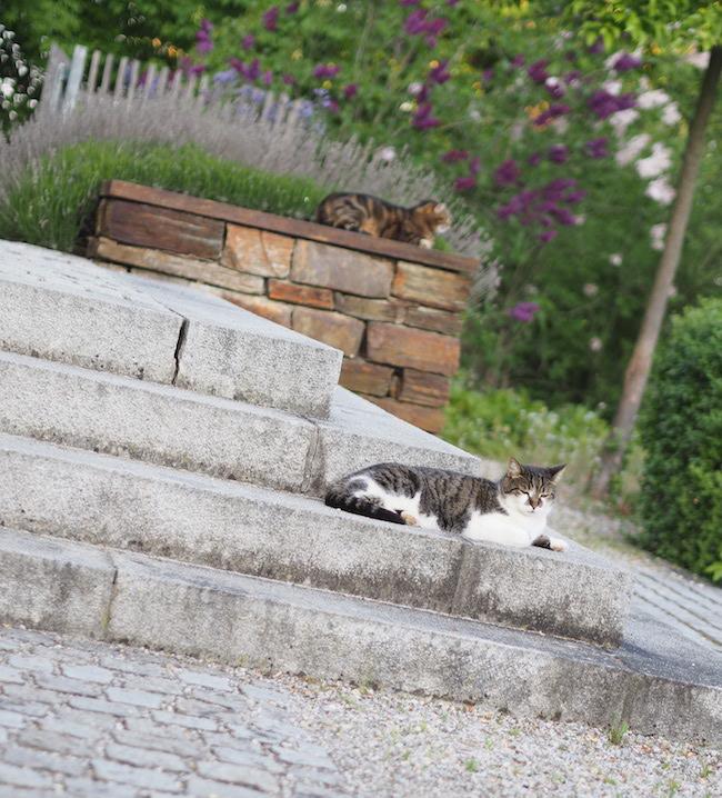 Zwei unserer drei Katzen auf der Treppe