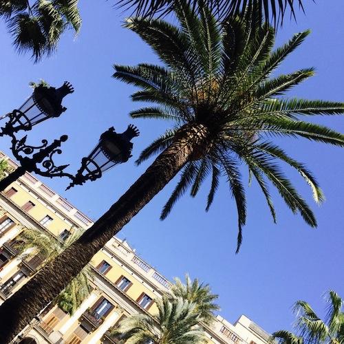 Barcelona Palme